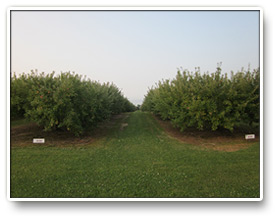 Anderson Apple Orchard Indiana