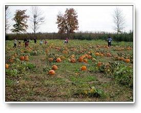 Pleasant View Apple Orchard Pumpkin Patch
